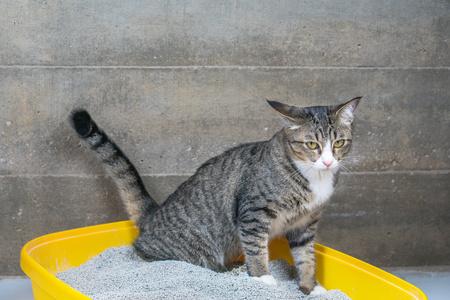gatto in letteria