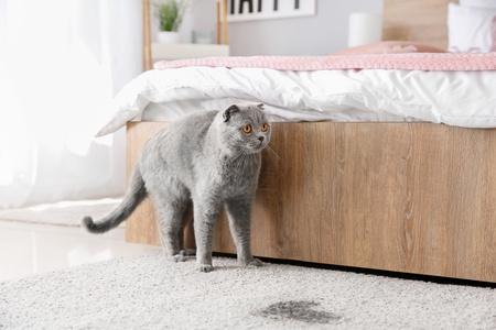 Un gatto spaventato