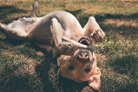 cane felice con l'osso