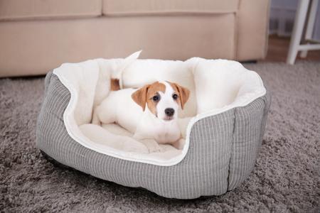 cucciolo di cane felice nel letto biologico