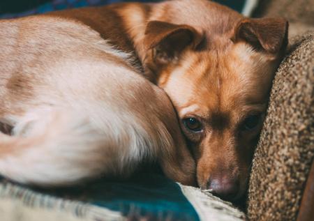 cane depresso che ha paura dell'uomo