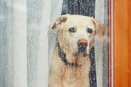 Un cane che guarda fuori dalla finestra