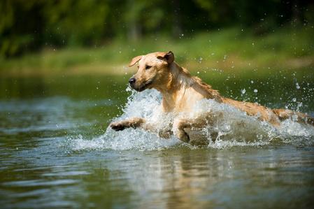 cane che corre nel fiume