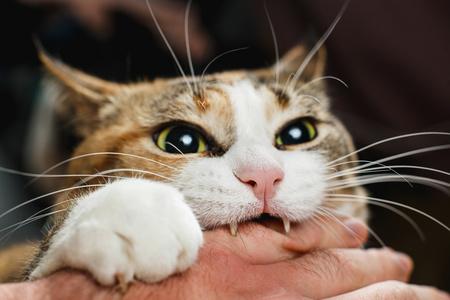 Gatto che morde la mano a qualcuno