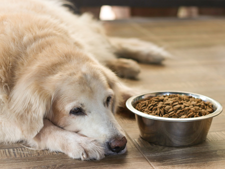 Cane con malattia intestinale