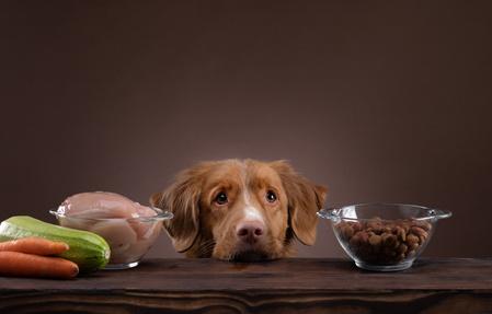 Un cane tra due ciotole di cibo
