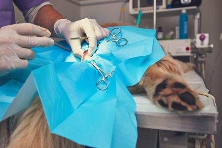 Operazione chirurgica lipoma del cane