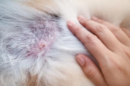 lesioni cutanee nel cane