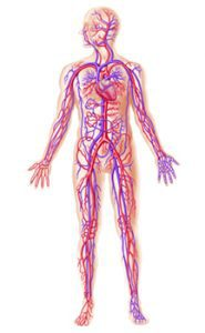 healthy blood circulation