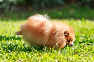 cane con problemi urinari