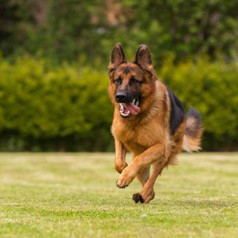 cane che pratica l'esercizio fisico