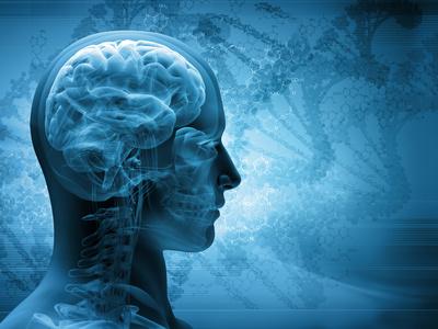 cervello umano glinfatico