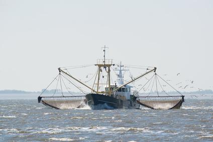 pesca selvaggia