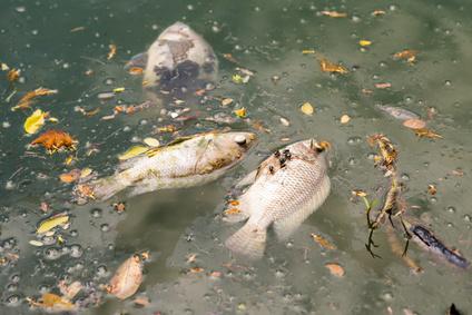 pesce inquinato