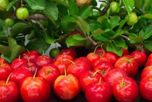 frutti e bacche rosse