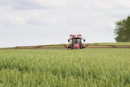 grano con pesticidi