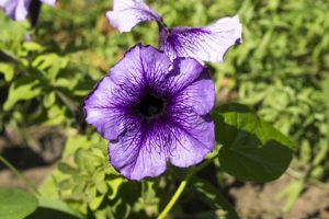 flora batterica in natura