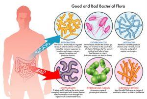 buoni a cattivi probiotici nel corpo