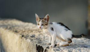 Cucciolo di gatto sottopeso