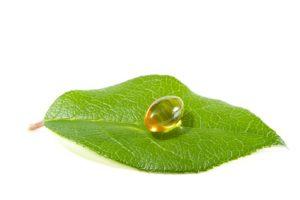 acidi grassi essenziali e foglia pianta