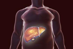 fegato in fase di disintossicazione