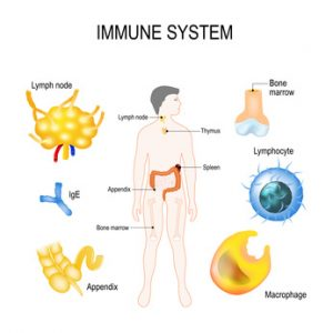 il complesso sistema immunitario umano