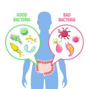 illustrazione flora batterica