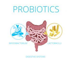 flora intestinale piena di probiotici