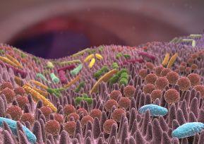 batteri e virus ne tratto digerente