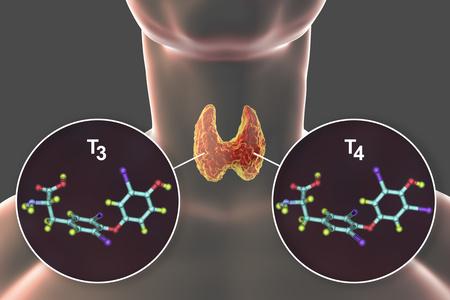 gli ormoni tiroidei