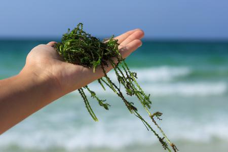 alghe al mare piene di iodio